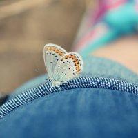 знакомство с лесной красавицей :: Алина Фирсанова