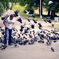 как прикормить стаю :: Валерия Матикайнен