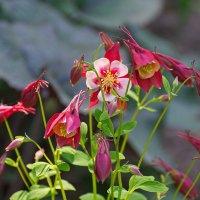 Весеннее цветение. :: Геннадий Александрович