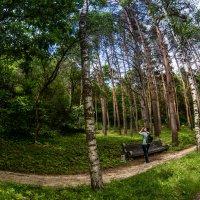 парк :: Анна Брацукова