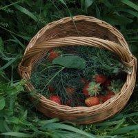 Первый урожай сезона :: Людмила (Руца)