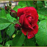 После дождя :: Надежда