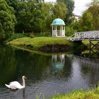 А белый лебедь на пруду........ :: Наталия Лыкова