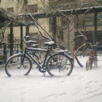 Snow&Bike :: Алексей Гимпель