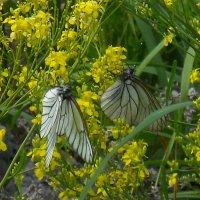Нашествие бабочек :: Оксана Коробова