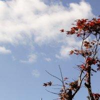 Осеннее дерево :: Эмиль Файзулин
