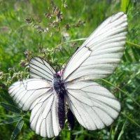 Бабочки :: Олег Петрушов