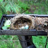 Гнездо..... :: Наталья C