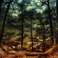 лес :: Slava Hamamoto
