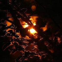 Ирга в закате :: Александр Кузьмин