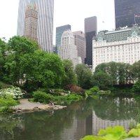 Уголок Центрального парка, Нью-Йорк :: Денис .