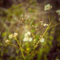 Цветочки в поле :: Кристина Беляева