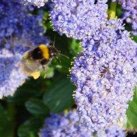 Пчела в полете :: Елена Мартынова