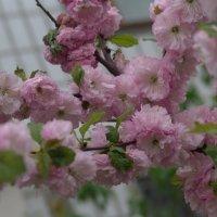 Весна :: Таня Ворина