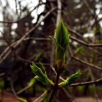 весна :: oxana