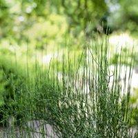 гипноз трава :: Allika B