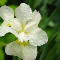 Дождливое настроение :: Константин Вергун