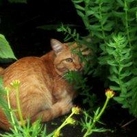 рыжий котик :: Женя Релье