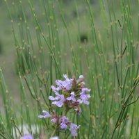 цветы :: Olga Pomozova