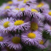 Цветы :: Эльвира Абдрахманова