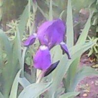 цветы :: Аверьянов Александр