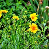 Июньские цветы... :: Михаил Столяров