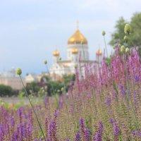 Лавандовые поля :: Екатерина Соломатина