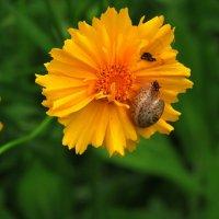 Встреча на цветке :: Marina Timoveewa