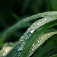 Утренняя влага :: Лия Чурина