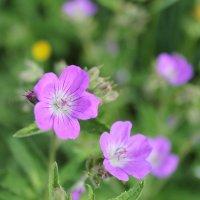 лесные цветочки :: Ирина Рыкина