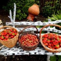 Клубнично - земляничный урожай . :: Hаталья Беклова