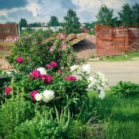 Цветы у стройки... :: Nonna