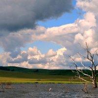 Старое дерево :: Евгений Юрков