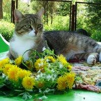 Томас на отдыхе :: Владимир Гилясев