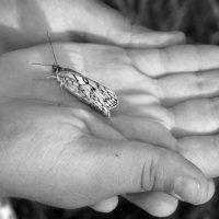 на моих ладошках бабочка присела, села, посидела, дальше полетела :: Юлия Мошкова