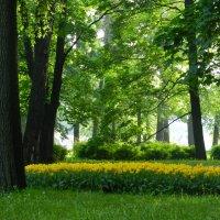 В парке :: Анюта Румянцева