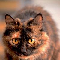 Чудесная соседская кошка ))) :: kukuruza