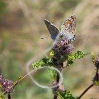 бабочки :: Алена Дегтярёва