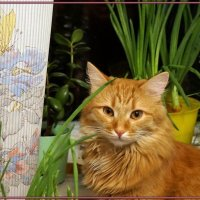 Кот весной :: Елена Федотова