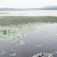 Озеро лотосов :: Наталья Zima