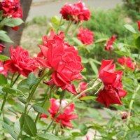 Цветы в парке :: Вероника Громова