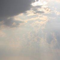 Серебристо-золотое море :: Наталья Кочегарова