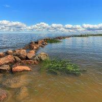Лето на заливе :: Сергей Григорьев