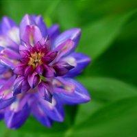 Любимый цветочек :: Владимир Гилясев