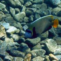 Рыбка :: Igor P