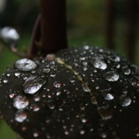 Летний дождь :: Dasha Starchikova