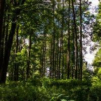 Краски летнего леса :: Владимир Буравкин