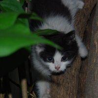 Котёнок :: Нелли *