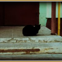 Ох, уж это ЖКУ - без чёрного кота, здесь не обошлось... :: Ольга Кривых