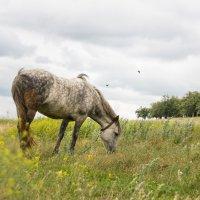 Лошадь :: Алексей Самошин